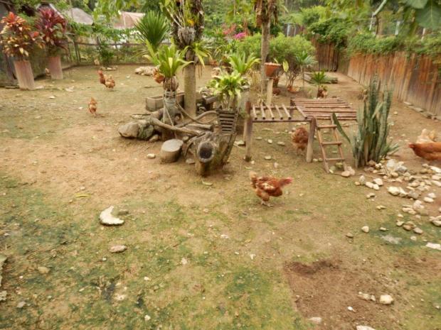 THE RESORT'S CHICKEN FARM