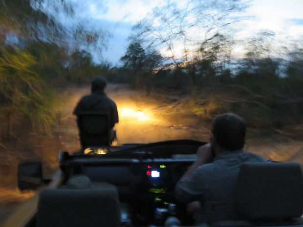 LATE AFTERNOON GAME DRIVE