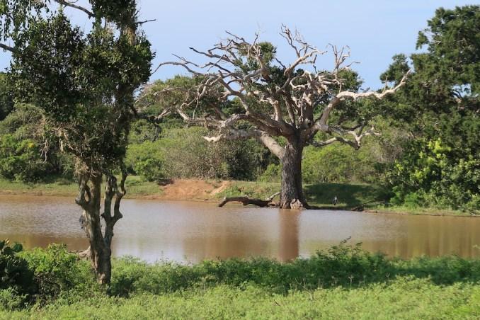 SAFARI IN YALA NATIONAL PARK