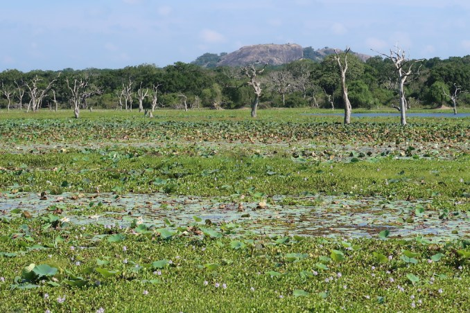 SAFARI IN YALA NATIONAL PARK