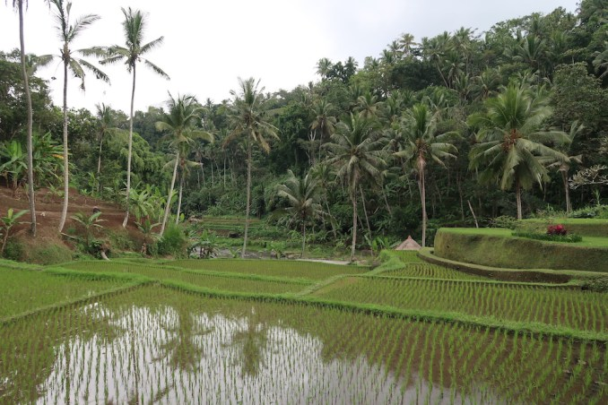 FOUR SEASONS SAYAN: RICE PADDIES