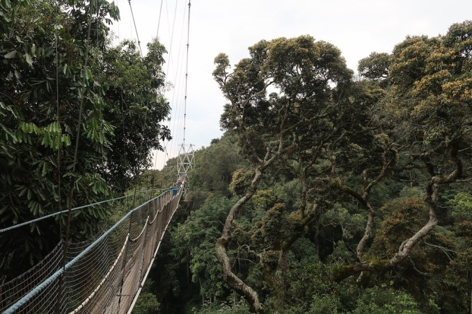NYUNGWE NATIONAL PARK: CANOPY WALK