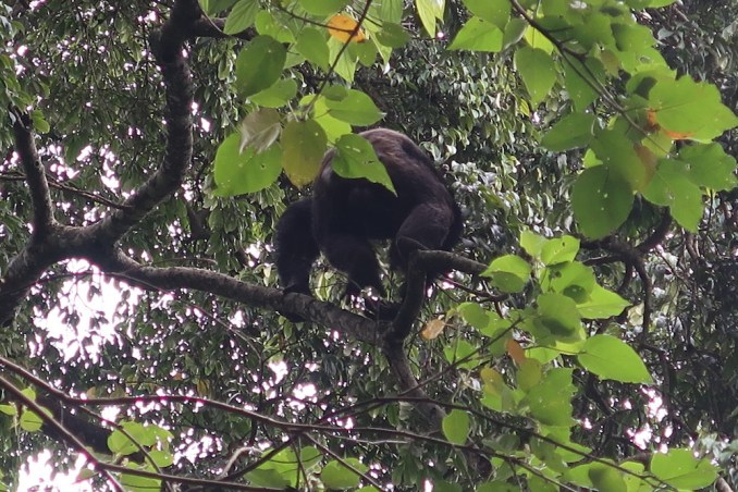 NYUNGWE NATIONAL PARK: CHIMPANZEE TRACKING