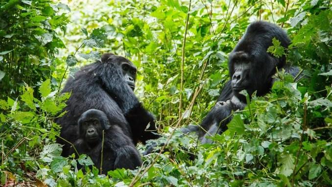 rwanda travel guide