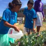 Bradley Tech Joins Urban Agriculture Movement, Supplies Food Pantries with Food From Community Garden