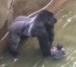 The Gregg Family has recommended that people make donations to The Cincinnati Zoo in Harambe's name. (Cincinnati Zoo)
