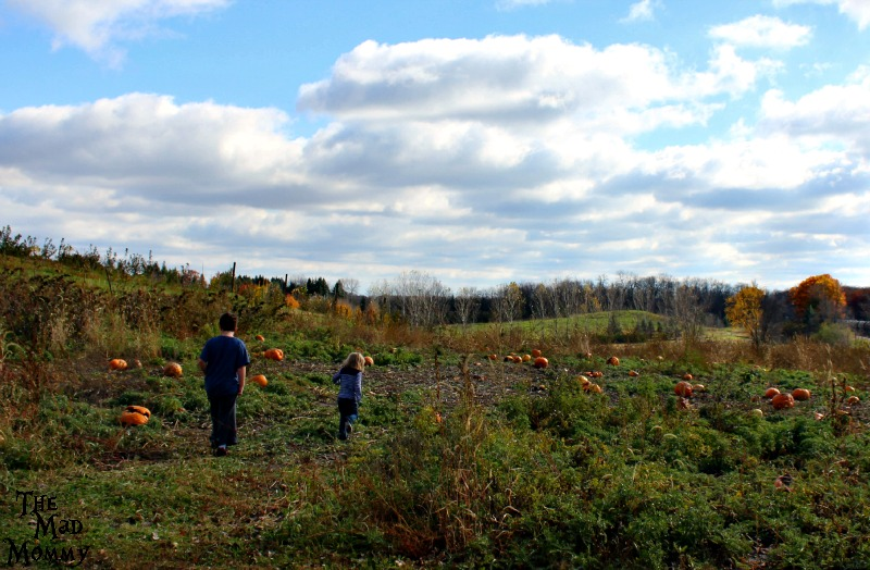 Finding the perfect pumpkins to pick!