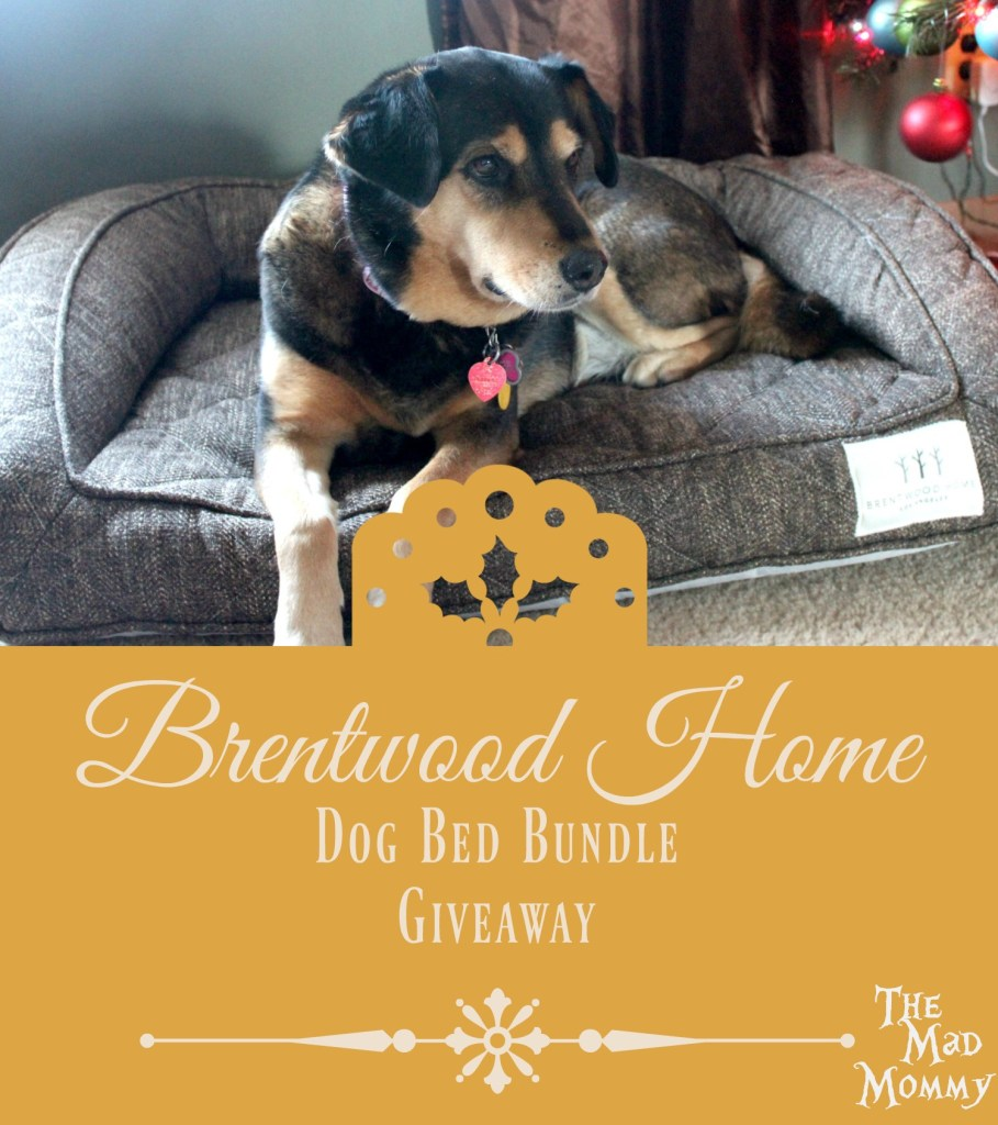 How would you like to win one just like it, a $200.00 value, for your awesome pet? #BrentwoodHome #Giveaway #pets