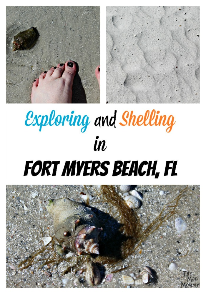 We surprised our kids with a weekend trip to Fort Myers Beach, Florida and we lucked out because it happened to be the weekend of the Shell Festival! Captiva and Sanibel Islands are the best places to go shelling in Fort Myers Beach!