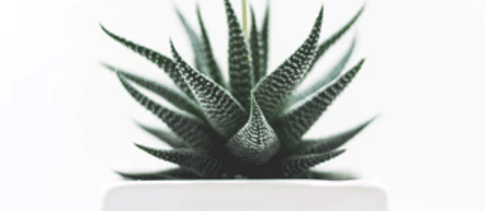 Find the best houseplants for de-stressing and purifying. They are also, low maintenance and beneficial.