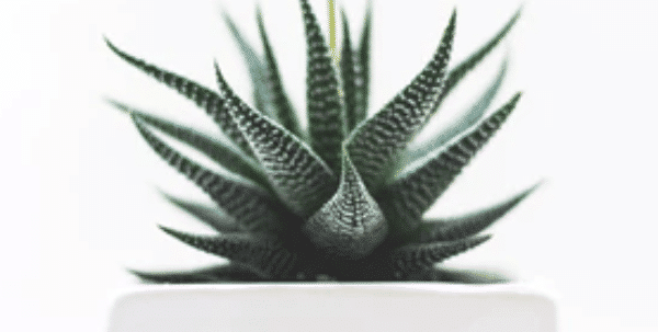 Best Houseplants To De-Stress Your Home and Purify The Air