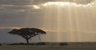 Sunbeams coming down on the plains later in the day in Amboseli.