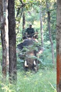 Satpura National Park Madhya Pradesh India safari