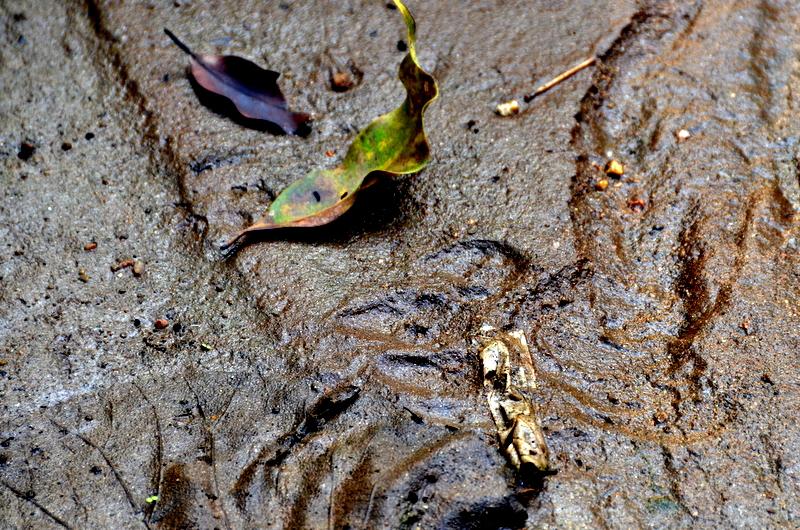 pench national park tiger reserve in Madhya Pradesh