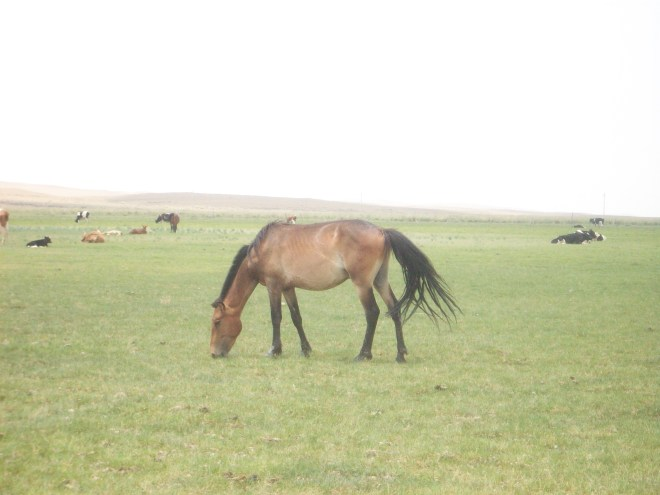 The grasslands, living up to their name.  There is grass and there are horses