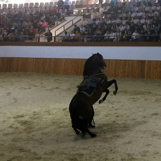 'the horse ballet'