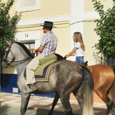 some fine Andalusian horses