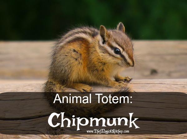 animal totem chipmunk the