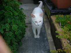 Duchess, Abandoned-rehomed