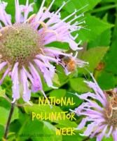 Everybody's Buzzing about National Pollinator Week 2015