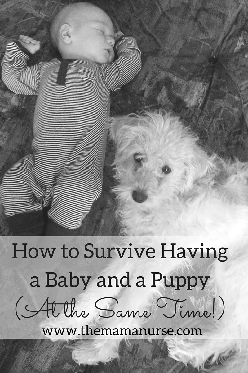 how to survive having a baby and puppy at the same time the