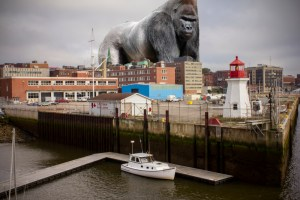 Cruise ship comes to Saint John just days after giant gorilla attack