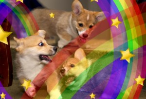 Cabinet minister loses after totally forgetting to promise puppies, rainbows