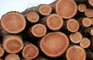 Insecure Maritime forestry workers deny existence of softwood