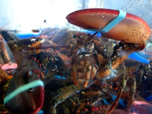 China buys Canadian lobsters to start Great Lobster Army