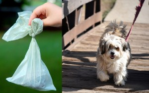 Scientists find strong correlation between loving dogs, carrying little bags of shit around