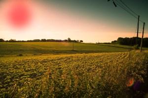 Red sun over PEI prompts ritualistic potato sacrifice