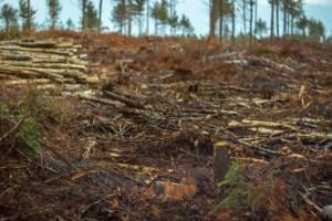 New Brunswick's 10 most beautiful clear-cuts, ranked