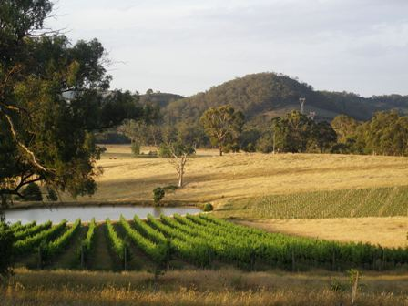 Two Hills Vineyard (2/6)