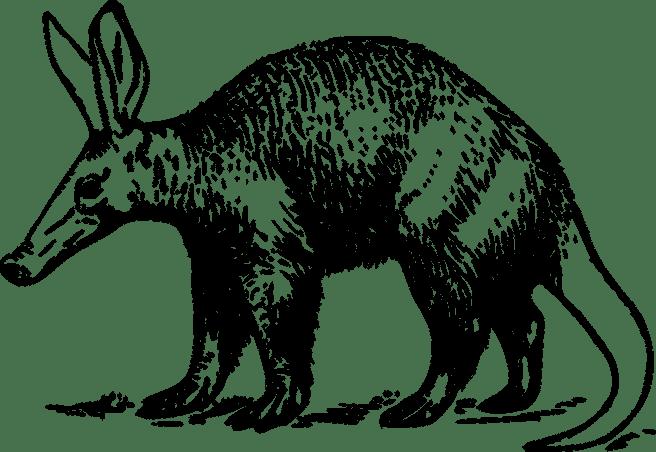 aardvark-37587_1280