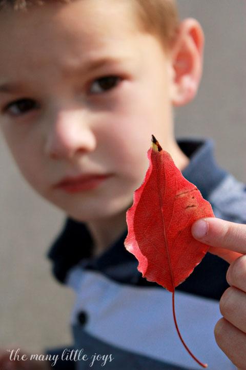 many-little-joys-of-october-leaf-hunt