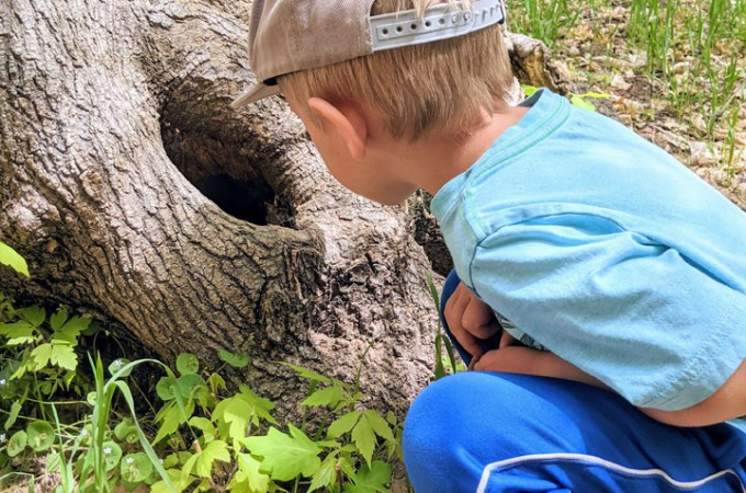 boy looking in hole in a tree during fun Friday adventure