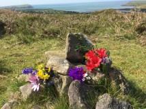 JUNE 2017 garden and posies (10)