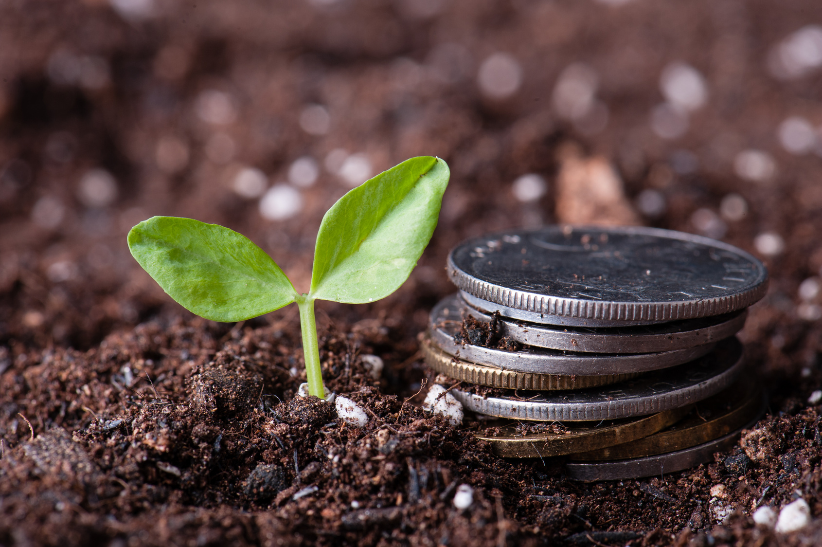 How to Grow Your Business with Content Marketing for Any Size Business and Budget