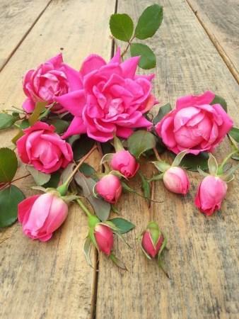roseslastofseason