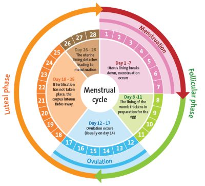water cycle diagram with questions ruger 10 22 trigger assembly is the master cleanse safe for women who are menstruating?