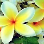 Aloha Breathing