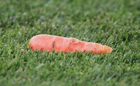 Καρότα σε γήπεδο