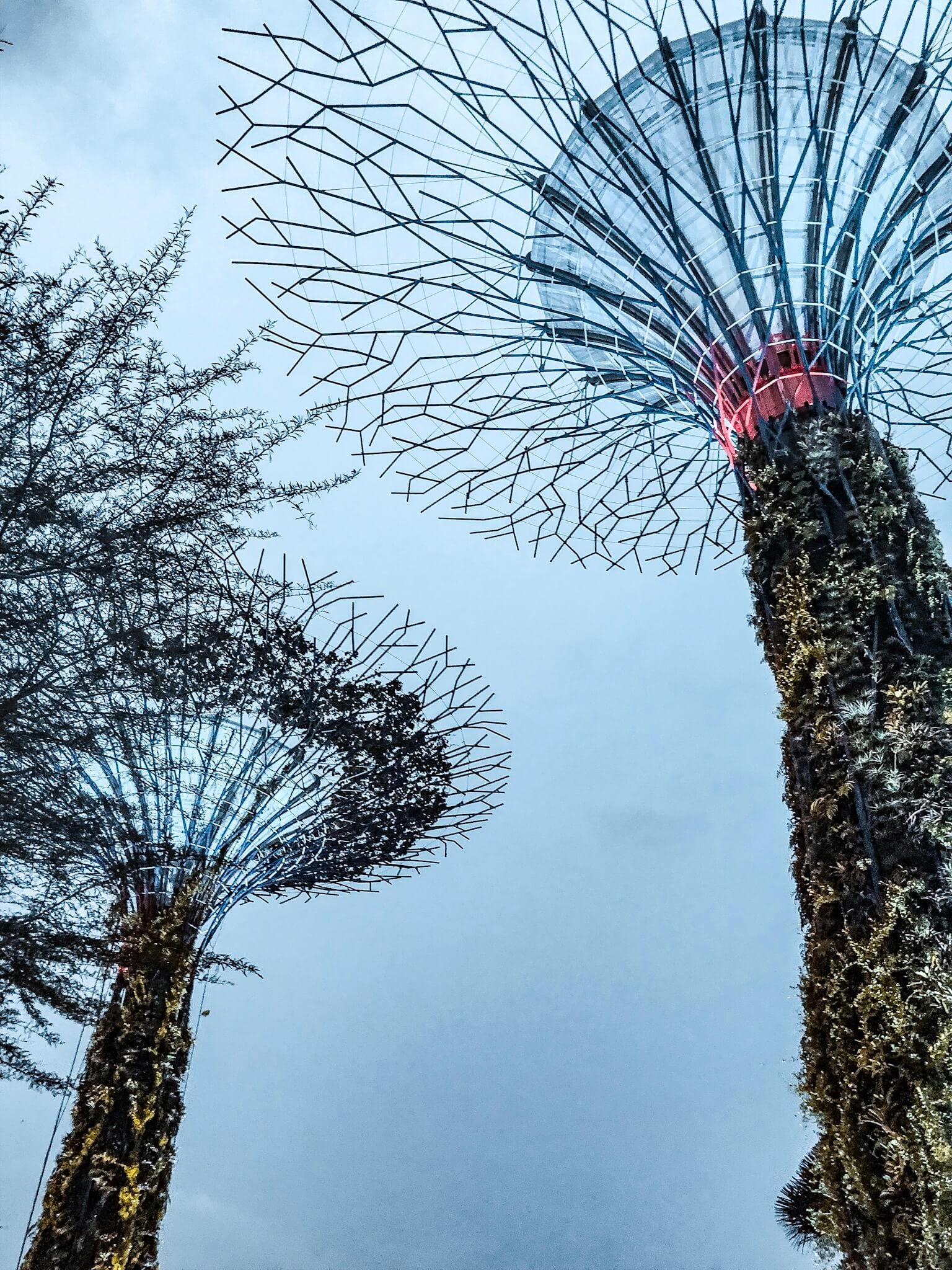 singapore super trees view from bottom