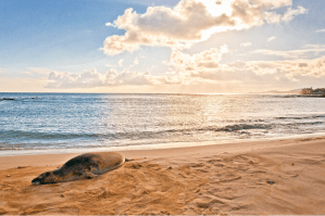 best hawaiian islands for families kauai