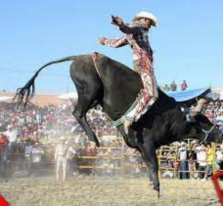 Jaripeo, un deporte extremo en Oaxaca | nvinoticias.com