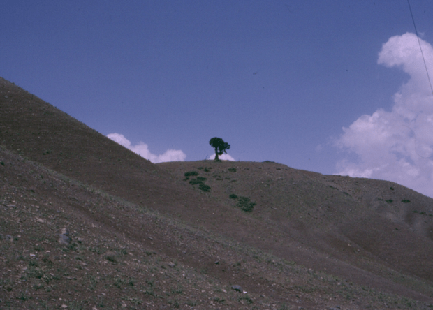 Degraded Alpine Range in Taleqan