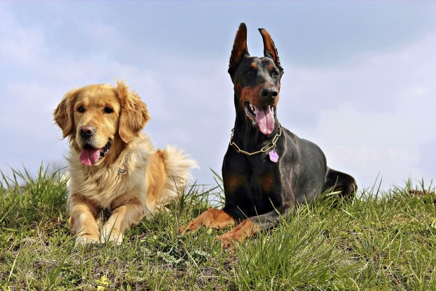 How Tragic!: Q&A on Canine Hypothyroidism | the meowing vet