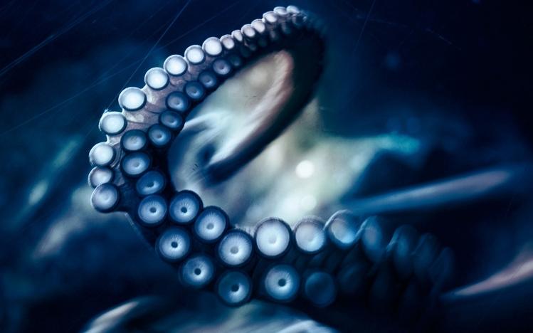 Anime Koi Fish Girl Wallpaper Octopus Windows 10 Theme Themepack Me