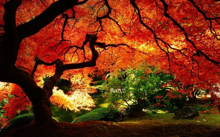 Fall Leaves Wallpaper Windows 7 Autumn Windows 10 Theme Themepack Me