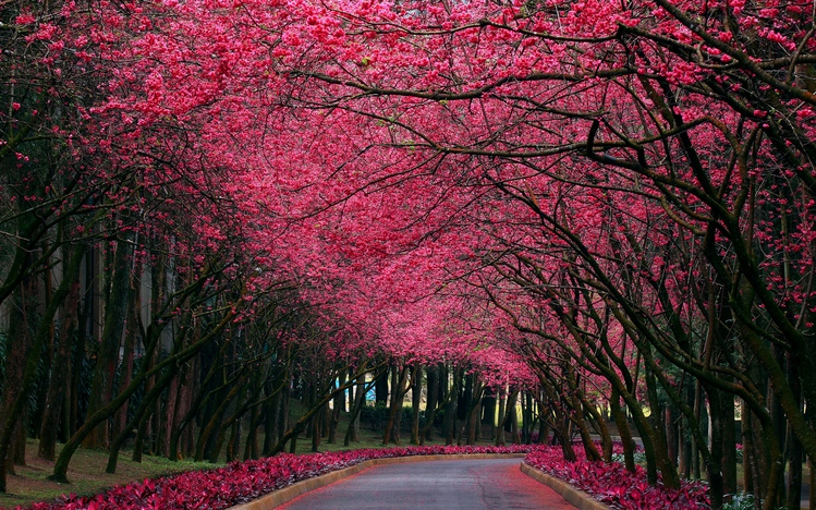 Hd Wallpapers Pack For Windows 10 Pink Windows 10 Theme Themepack Me